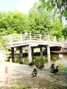 East Bergholt 木製の橋 Foot Bridge