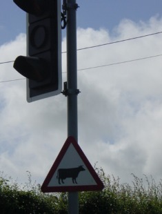 traffic signal for cows