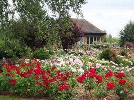 Gardens of the Rose