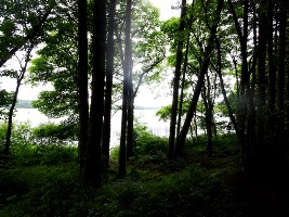 Lough Key Forest